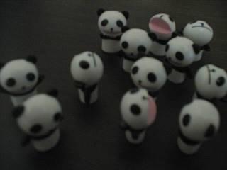パンダ、ミーティング中。